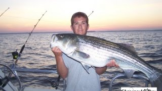 Chesapeake Bay Trophy Rockfish 4 #51