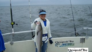 Chesapeake Bay Trophy Rockfish 3 #1