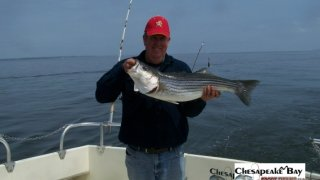 Chesapeake Bay Nice Rockfish 3 #24