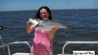 Chesapeake Bay Nice Rockfish 2 #41