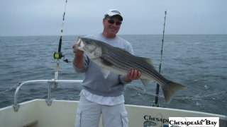 Chesapeake Bay Nice Rockfish 2 #28