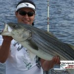 Chesapeake Bay Trophy Rockfish 3 Album Cover