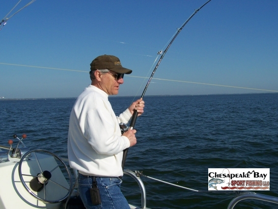 Action shots 2 chesapeake bay sport fishing for Annapolis fishing charters