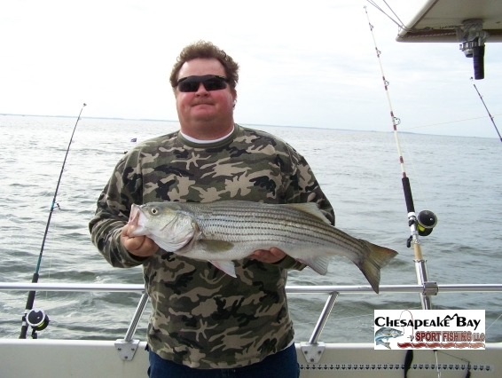 Nice rockfish chesapeake bay sport fishing for Annapolis fishing charters