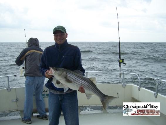 Trophy rockfish chesapeake bay sport fishing for Chesapeake bay fish