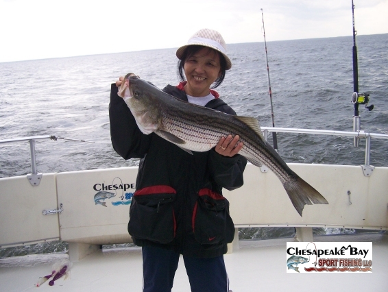 Trophy rockfish chesapeake bay sport fishing for Striper fishing chesapeake bay